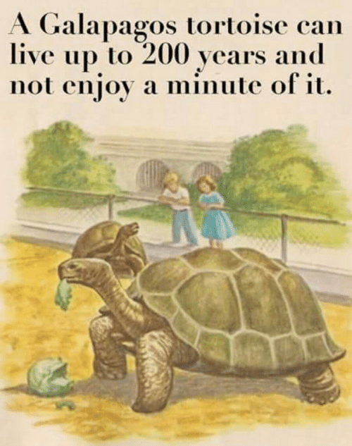 tortoise: A Galapagos tortoise can  live up to 200 years and  not enjoy a minute of it.