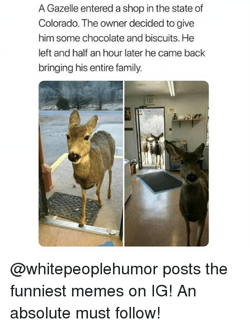 Gazelle: A Gazelle entered a shop in the state of  Colorado. The owner decided to give  him some chocolate and biscuits. He  left and half an hour later he came back  bringing his entire family.  alif @whitepeoplehumor posts the funniest memes on IG! An absolute must follow!