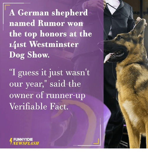 """I Guessed It: A German shepherd  named Rumor won  the top honors at the  141st Westminster  Dog Show.  """"I guess it just wasn't  our year,"""" said the  owner of runner-up  Verifiable Fact.  FUNNY DIE  NEWSFLASH"""
