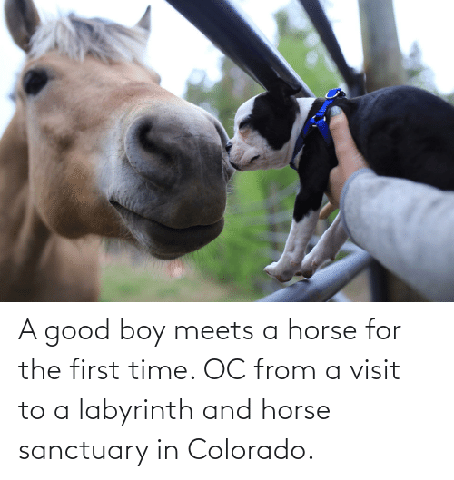 Labyrinth: A good boy meets a horse for the first time. OC from a visit to a labyrinth and horse sanctuary in Colorado.