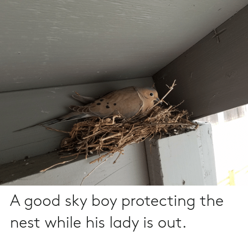 Good, Nest, and Boy: A good sky boy protecting the nest while his lady is out.