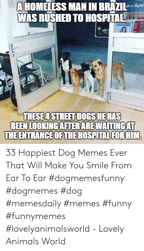 homeless man: A HOMELESS MAN IN BRAZIl  WAS RUSHED TO HOSPITALS  AS  A PRECO DE CUSTO  的1  THESE4 STREET DOGS HE HAS  BEEN LOOKING AFTERAREWAITINGAT  THE ENTRANCE OF THE HOSPITAL FORHIM 33 Happiest Dog Memes Ever That Will Make You Smile From Ear To Ear #dogmemesfunny #dogmemes #dog #memesdaily #memes #funny #funnymemes #lovelyanimalsworld - Lovely Animals World