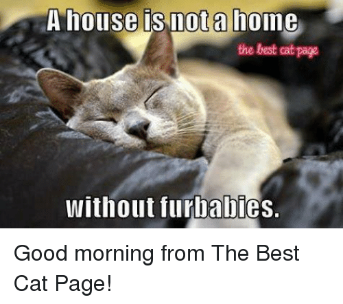 Memes, Good Morning, and Best: A house is not a home  the best cat page  without furbabies. Good morning from The Best Cat Page!