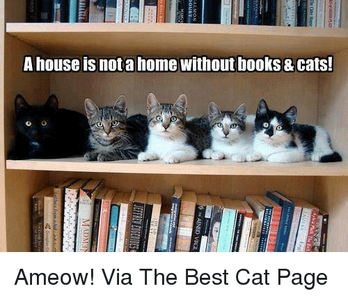 Memes, Best Cat, and 🤖: A house isnota home without books & Cats! Ameow! Via The Best Cat Page