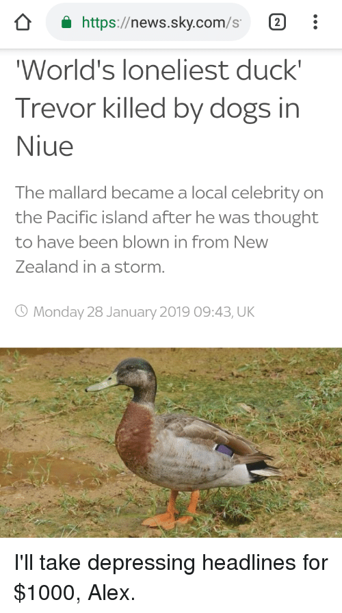 Dogs, News, and Duck: a https://news.sky.com/s  World's loneliest duck  Trevor killed by dogs in  Niue  The mallard became a local celebrity on  the Pacific island after he was thought  to have been blown in from New  Zealand in a storm.  O Monday 28 January 2019 09:43, UK