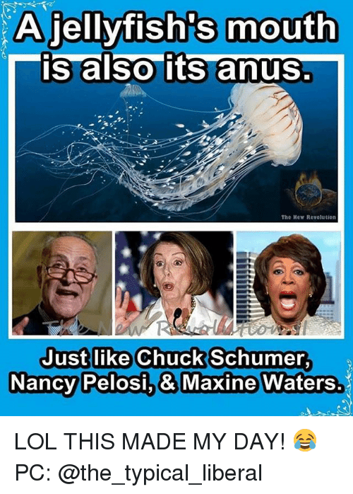 Lol, Memes, and Revolution: A jellyfish's mouth  is also its anus  The Mew Revolution  Just like Chuck Schumer  Nancy  Pelosi.& Maxine Waters. LOL THIS MADE MY DAY! 😂 PC: @the_typical_liberal