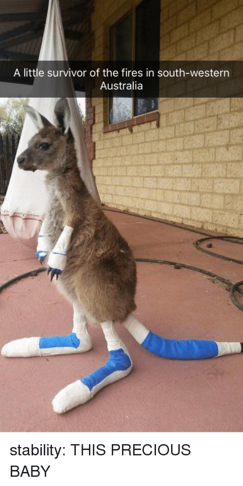 Precious, Target, and Tumblr: A little survivor of the fires in south-western  Australia stability: THIS PRECIOUS BABY