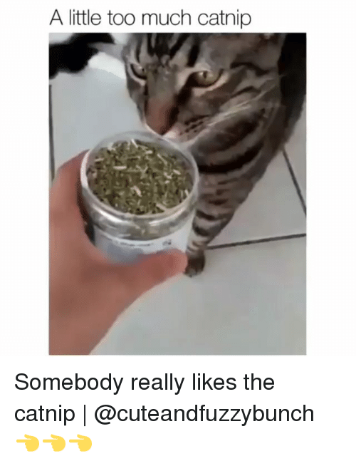 Memes, Too Much, and 🤖: A little too much catnip Somebody really likes the catnip | @cuteandfuzzybunch 👈👈👈