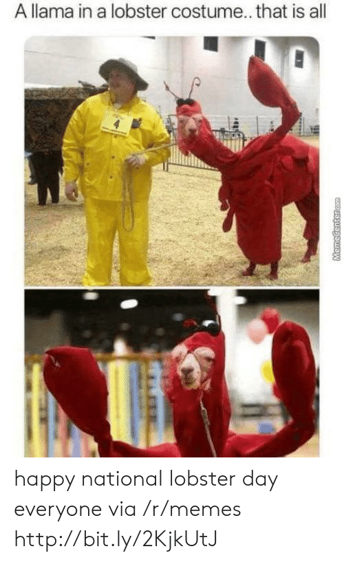 Memecenter Com: A llama in a lobster costume.. that is all  MemeCenter.com happy national lobster day everyone via /r/memes http://bit.ly/2KjkUtJ