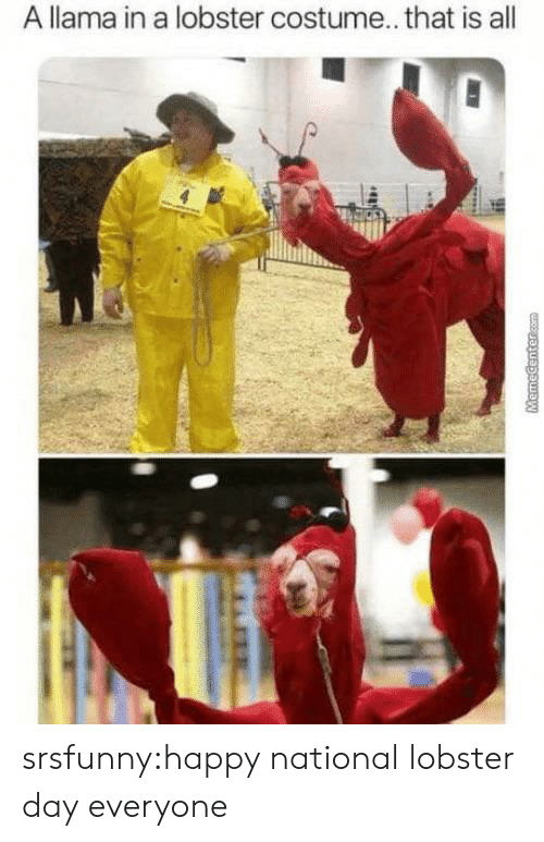 Tumblr, Blog, and Happy: A llama in a lobster costume... that is all  MHR  MemeCentercom srsfunny:happy national lobster day everyone