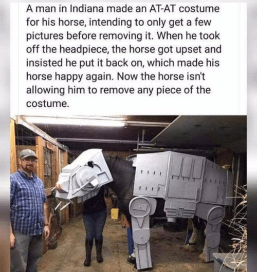 Took: A man in Indiana made an AT-AT costume  for his horse, intending to only get a few  pictures before removing it. When he took  off the headpiece, the horse got upset and  insisted he put it back on, which made his  horse happy again. Now the horse isn't  allowing him to remove any piece of the  costume.