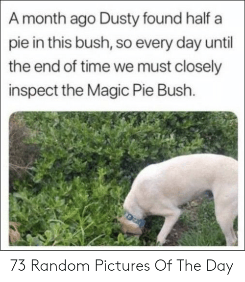Magic, Pictures, and Time: A month ago Dusty found half a  pie in this bush, so every day until  the end of time we must closely  inspect the Magic Pie Bush. 73 Random Pictures Of The Day