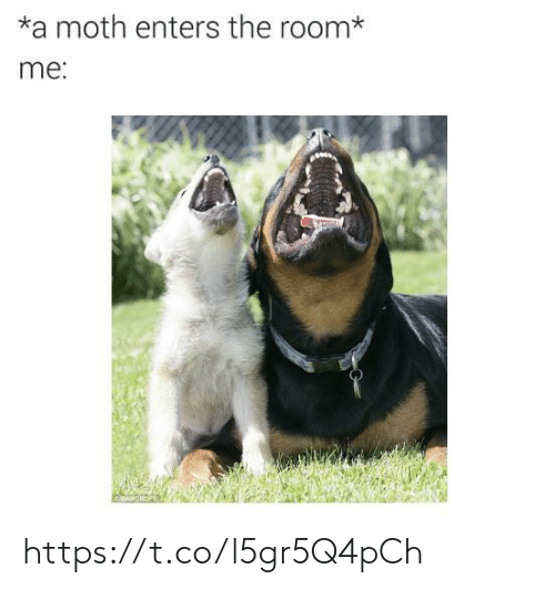 the room: *a moth enters the room*  me: https://t.co/l5gr5Q4pCh