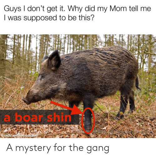 Gang: A mystery for the gang