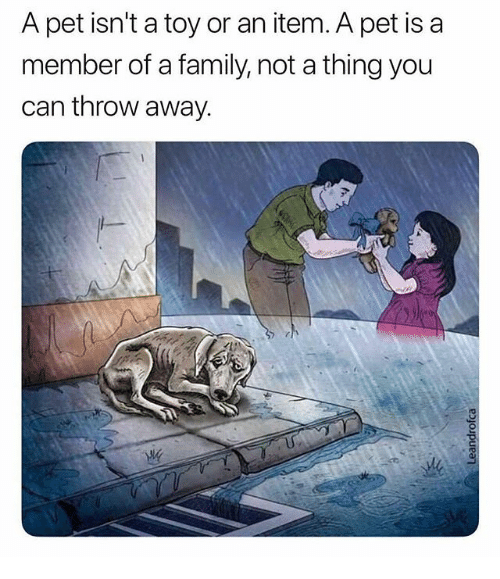 Family, Memes, and 🤖: A pet isn't a toy or an item. A pet is a  member of a family, not a thing you  can throw away  じ!