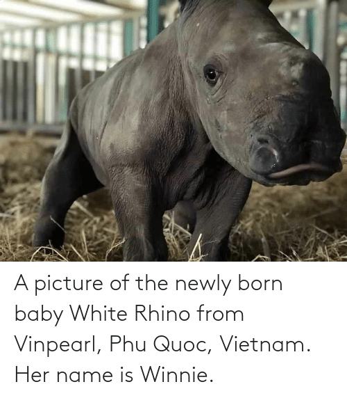 Aww Memes: A picture of the newly born baby White Rhino from Vinpearl, Phu Quoc, Vietnam. Her name is Winnie.