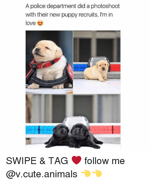 photoshootings: A police department did a photoshoot  with their new puppy recruits, I'm in  love SWIPE & TAG ❤️ follow me @v.cute.animals 👈👈