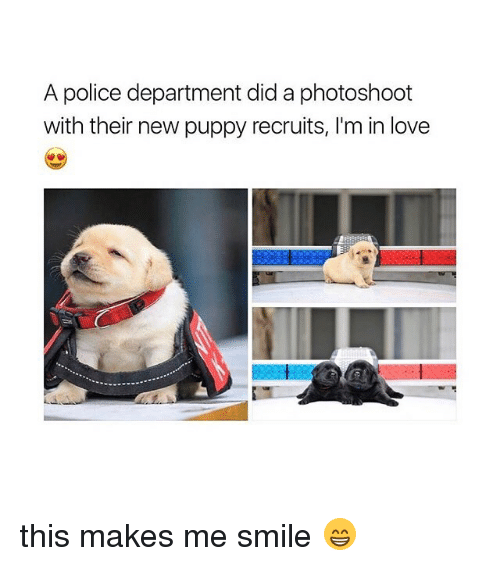Love, Police, and Puppy: A police department did a photoshoot  with their new puppy recruits, I'm in love this makes me smile 😁