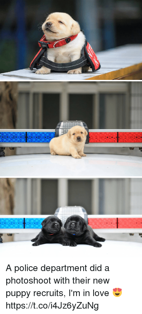 Love, Police, and Puppy: A police department did a photoshoot with their new puppy recruits, I'm in love 😍 https://t.co/i4Jz6yZuNg