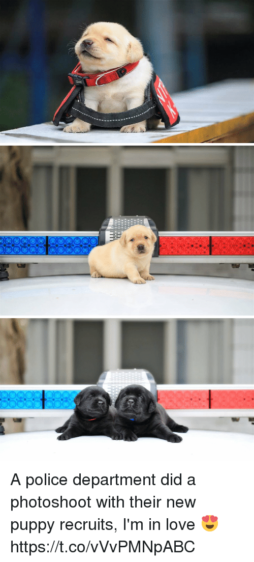 Love, Police, and Puppy: A police department did a photoshoot with their new puppy recruits, I'm in love 😍 https://t.co/vVvPMNpABC