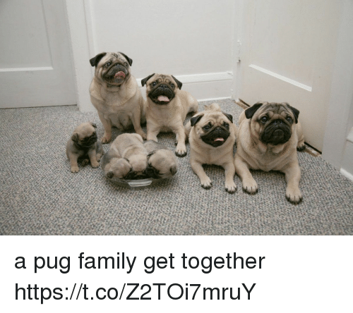 Pugged: a pug family get together https://t.co/Z2TOi7mruY