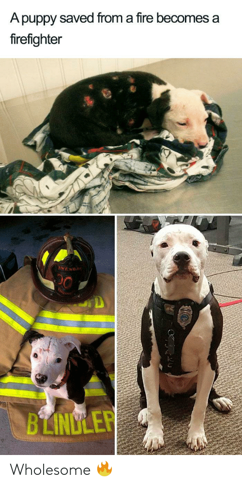Fire, Puppy, and Firefighter: A puppy saved from a fire becomes a  firefighter  AWENDA  BLINDLER Wholesome 🔥