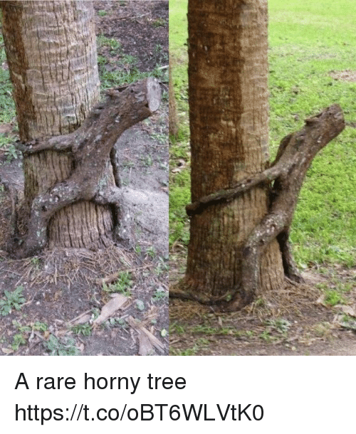 Rareness: A rare horny tree https://t.co/oBT6WLVtK0