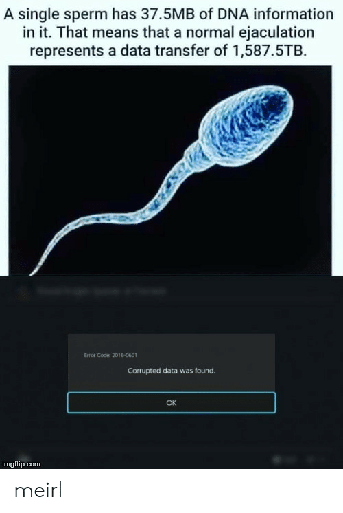 Information, MeIRL, and Single: A single sperm has 37.5MB of DNA information  in it. That means that a normal ejaculation  represents a data transfer of 1,587.5TB  Error Code: 2016-0601  Corrupted data was found.  OK  imgflip.com meirl