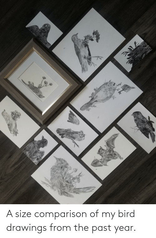 Drawings: A size comparison of my bird drawings from the past year.