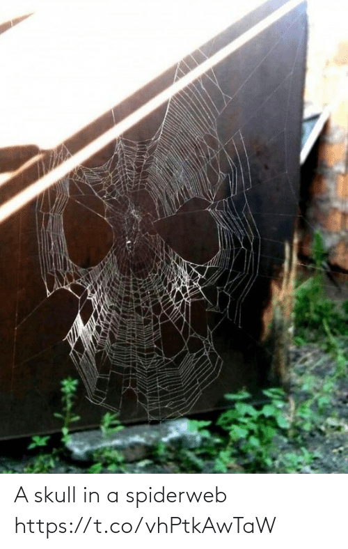 In A: A skull in a spiderweb https://t.co/vhPtkAwTaW