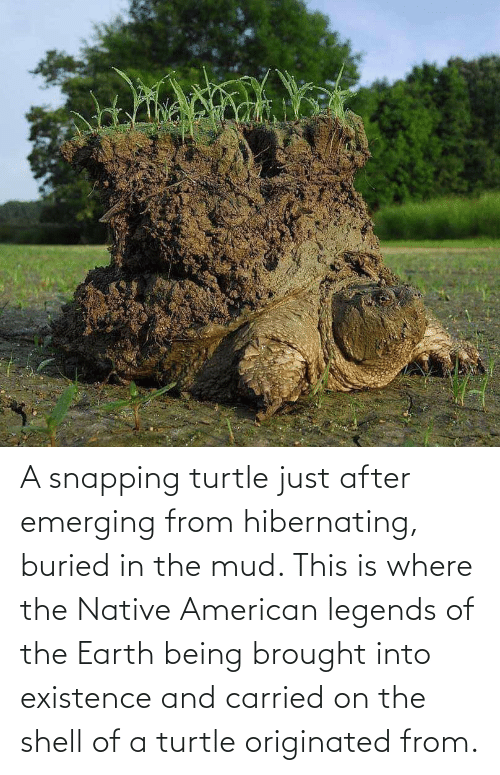 mud: A snapping turtle just after emerging from hibernating, buried in the mud. This is where the Native American legends of the Earth being brought into existence and carried on the shell of a turtle originated from.