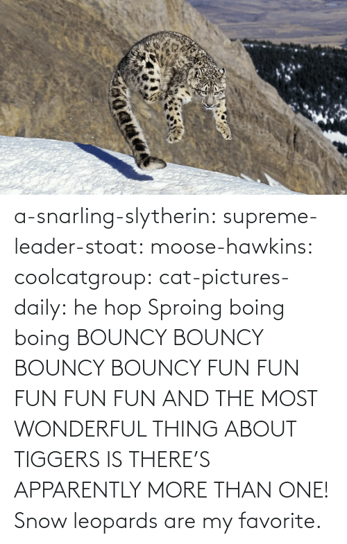 moose: a-snarling-slytherin: supreme-leader-stoat:  moose-hawkins:  coolcatgroup:  cat-pictures-daily: he hop  Sproing boing boing    BOUNCY BOUNCY BOUNCY BOUNCY FUN FUN FUN FUN FUN  AND THE MOST WONDERFUL THING ABOUT TIGGERS IS THERE'S APPARENTLY MORE THAN ONE!   Snow leopards are my favorite.