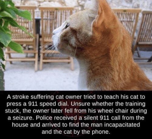 Phone, Police, and House: A stroke suffering cat owner tried to teach his cat to  press a 911 speed dial. Unsure whether the training  stuck, the owner later fell from his wheel chair during  a seizure. Police received a silent 911 call from the  house and arrived to find the man incapacitated  and the cat by the phone.
