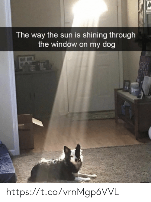 Memes, 🤖, and Sun: A  The way the sun is shining through  the window on my dog  GRY  EITR https://t.co/vrnMgp6VVL