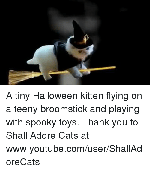 teenies: A tiny Halloween kitten flying on a teeny broomstick and playing with spooky toys. Thank you to Shall Adore Cats at www.youtube.com/user/ShallAdoreCats