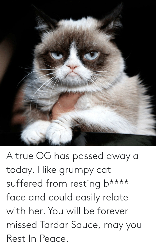 Tardar Sauce: A true OG has passed away a today. I like grumpy cat suffered from resting b**** face and could easily relate with her. You will be forever missed Tardar Sauce, may you Rest In Peace.