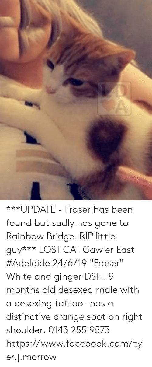 """Facebook, Memes, and Lost: A ***UPDATE - Fraser has been found but sadly has gone to Rainbow Bridge. RIP little guy***  LOST CAT Gawler East #Adelaide 24/6/19 """"Fraser"""" White and ginger DSH. 9 months old desexed male with a desexing tattoo -has a distinctive orange spot on right shoulder. 0143 255 9573 https://www.facebook.com/tyler.j.morrow"""