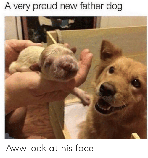 Aww, Proud, and Dog: A very proud new father dog Aww look at his face