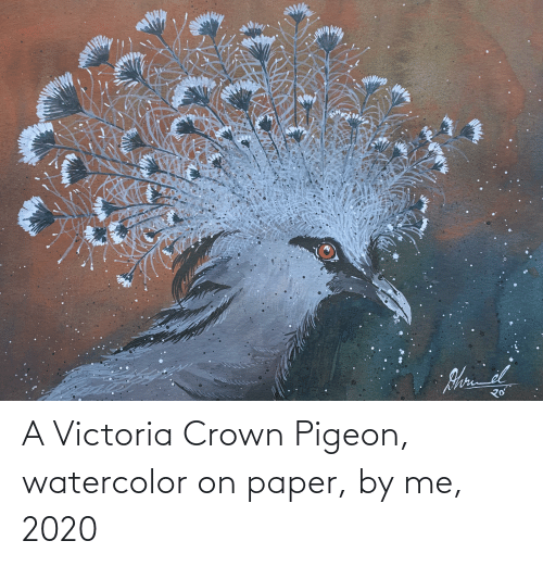 victoria: A Victoria Crown Pigeon, watercolor on paper, by me, 2020
