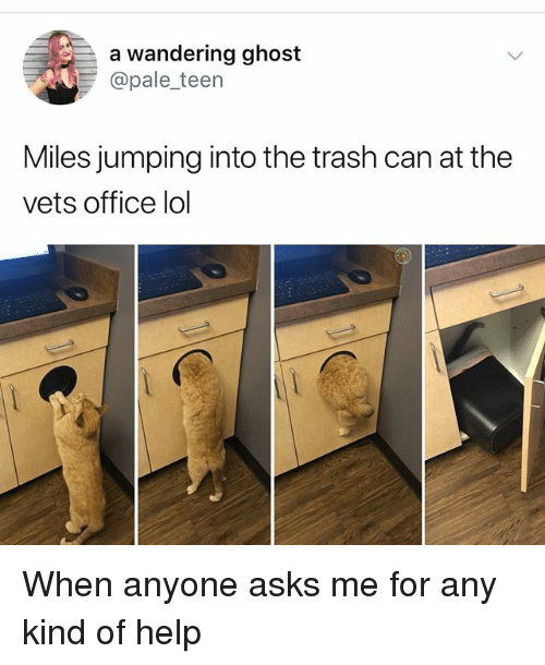 Lol, Memes, and Trash: a wandering ghost  @pale_teen  Miles jumping into the trash can at the  vets office lol When anyone asks me for any kind of help