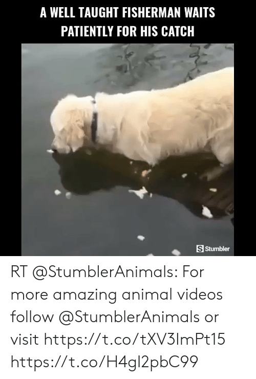 Animal Videos: A WELL TAUGHT FISHERMAN WAITS  PATIENTLY FOR HIS CATCH  S Stumbler RT @StumblerAnimals: For more amazing animal videos follow @StumblerAnimals or visit https://t.co/tXV3ImPt15 https://t.co/H4gI2pbC99