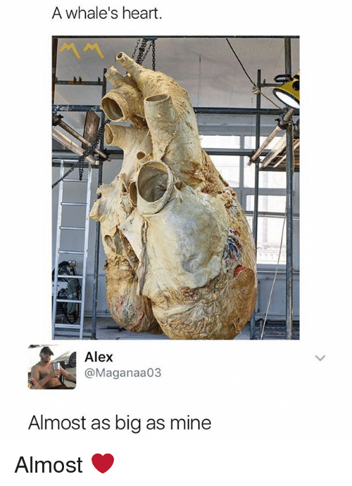 Heart, Dank Memes, and Mine: A whale's heart.  Alex  @Maganaa03  Almost as big as mine Almost ❤️