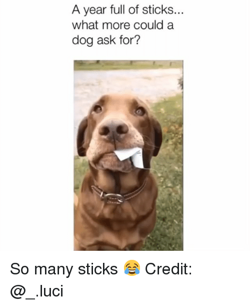 Memes, 🤖, and Sticks: A year full of sticks...  what more could a  dog ask for? So many sticks 😂 Credit: @_.luci
