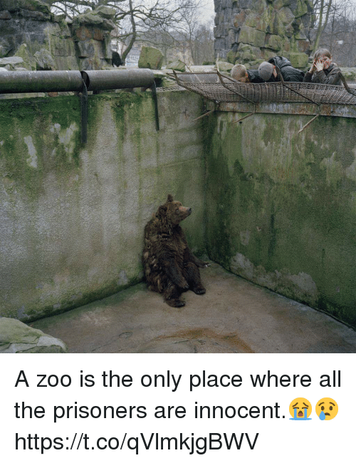 Memes, All The, and 🤖: A zoo is the only place where all the prisoners are innocent.😭😢 https://t.co/qVlmkjgBWV