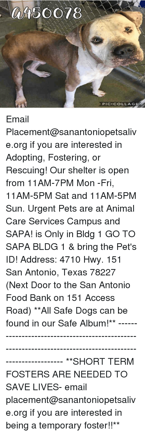 Dogs, Food, and Memes: a0078  PIC COLLAGE Email Placement@sanantoniopetsalive.org if you are interested in Adopting, Fostering, or Rescuing!  Our shelter is open from 11AM-7PM Mon -Fri, 11AM-5PM Sat and 11AM-5PM Sun.  Urgent Pets are at Animal Care Services Campus and SAPA! is Only in Bldg 1 GO TO SAPA BLDG 1 & bring the Pet's ID! Address: 4710 Hwy. 151 San Antonio, Texas 78227 (Next Door to the San Antonio Food Bank on 151 Access Road)  **All Safe Dogs can be found in our Safe Album!** ---------------------------------------------------------------------------------------------------------- **SHORT TERM FOSTERS ARE NEEDED TO SAVE LIVES- email placement@sanantoniopetsalive.org if you are interested in being a temporary foster!!**
