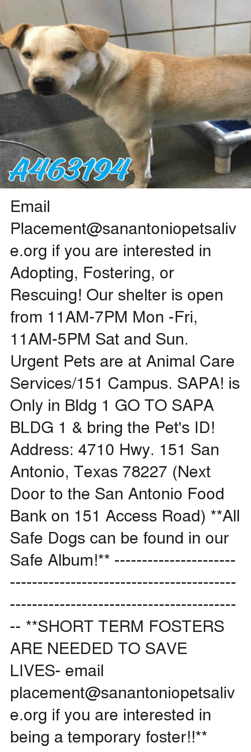 Dogs, Food, and Memes: A463194 Email Placement@sanantoniopetsalive.org if you are interested in Adopting, Fostering, or Rescuing!  Our shelter is open from 11AM-7PM Mon -Fri, 11AM-5PM Sat and Sun.  Urgent Pets are at Animal Care Services/151 Campus. SAPA! is Only in Bldg 1 GO TO SAPA BLDG 1 & bring the Pet's ID! Address: 4710 Hwy. 151 San Antonio, Texas 78227 (Next Door to the San Antonio Food Bank on 151 Access Road)  **All Safe Dogs can be found in our Safe Album!** ---------------------------------------------------------------------------------------------------------- **SHORT TERM FOSTERS ARE NEEDED TO SAVE LIVES- email placement@sanantoniopetsalive.org if you are interested in being a temporary foster!!**