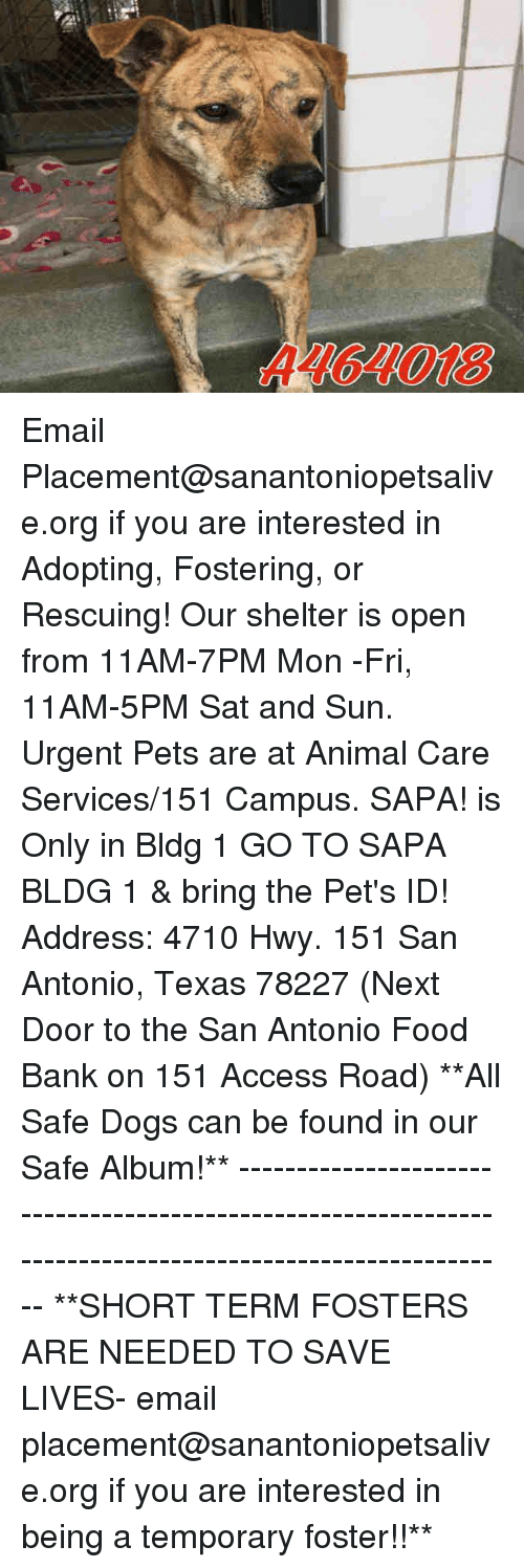 Dogs, Food, and Memes: A464018 Email Placement@sanantoniopetsalive.org if you are interested in Adopting, Fostering, or Rescuing!  Our shelter is open from 11AM-7PM Mon -Fri, 11AM-5PM Sat and Sun.  Urgent Pets are at Animal Care Services/151 Campus. SAPA! is Only in Bldg 1 GO TO SAPA BLDG 1 & bring the Pet's ID! Address: 4710 Hwy. 151 San Antonio, Texas 78227 (Next Door to the San Antonio Food Bank on 151 Access Road)  **All Safe Dogs can be found in our Safe Album!** ---------------------------------------------------------------------------------------------------------- **SHORT TERM FOSTERS ARE NEEDED TO SAVE LIVES- email placement@sanantoniopetsalive.org if you are interested in being a temporary foster!!**