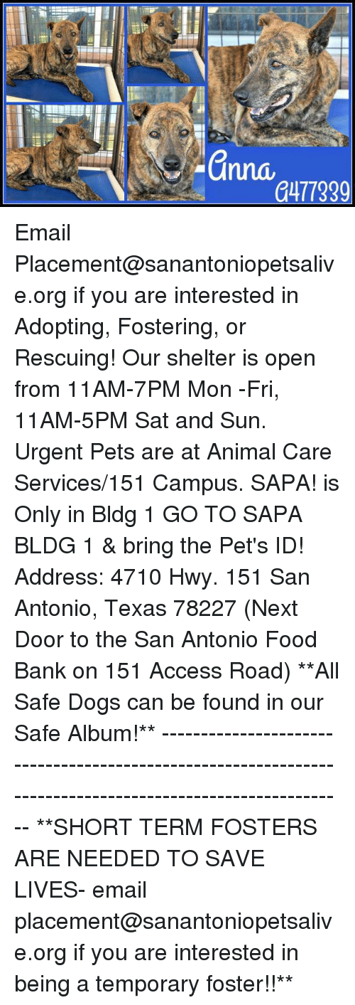 Dogs, Food, and Memes: a477339 Email Placement@sanantoniopetsalive.org if you are interested in Adopting, Fostering, or Rescuing!  Our shelter is open from 11AM-7PM Mon -Fri, 11AM-5PM Sat and Sun.  Urgent Pets are at Animal Care Services/151 Campus. SAPA! is Only in Bldg 1 GO TO SAPA BLDG 1 & bring the Pet's ID! Address: 4710 Hwy. 151 San Antonio, Texas 78227 (Next Door to the San Antonio Food Bank on 151 Access Road)  **All Safe Dogs can be found in our Safe Album!** ---------------------------------------------------------------------------------------------------------- **SHORT TERM FOSTERS ARE NEEDED TO SAVE LIVES- email placement@sanantoniopetsalive.org if you are interested in being a temporary foster!!**