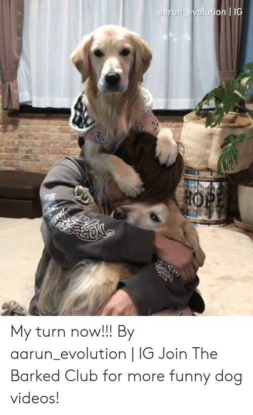 Club, Dank, and Funny: aarun evolution IG My turn now!!! By aarun_evolution | IG  Join The Barked Club for more funny dog videos!