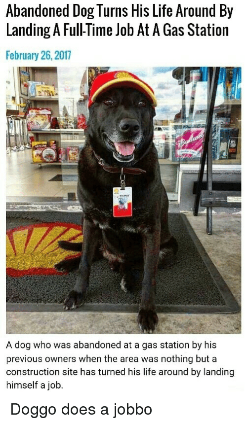 Doggo Does A: Abandoned Dog Turns His Life Around By  Landing A Full-Time Job At A Gas Station  February 26, 2017  A dog who was abandoned at a gas station by his  previous owners when the area was nothing but a  construction site has turned his life around by landing  himself a job <p>Doggo does a jobbo</p>